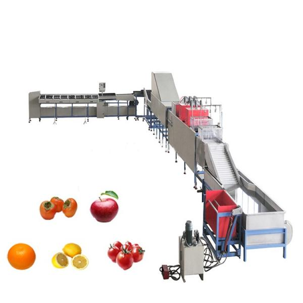 Turnkey Preserved Fruit and Vegetable Processing Line Candied Fruit Production Plant Dried Fruit and Vegetable Project Candied Preserved Fruit Processing Line #1 image
